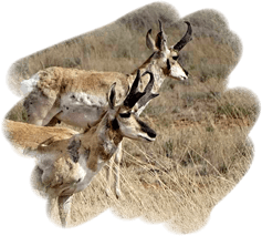 wildlife & hunting at midbar ranch